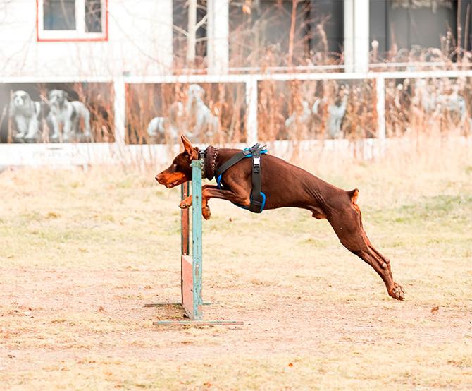 Школа дрессировки собак Марии Красильниковой